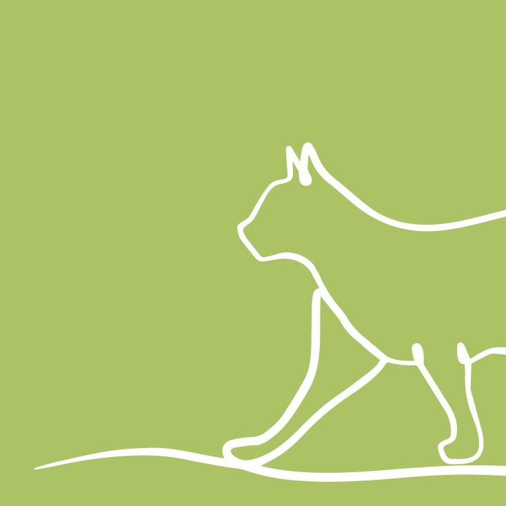 Cat Neutering In Knutsford