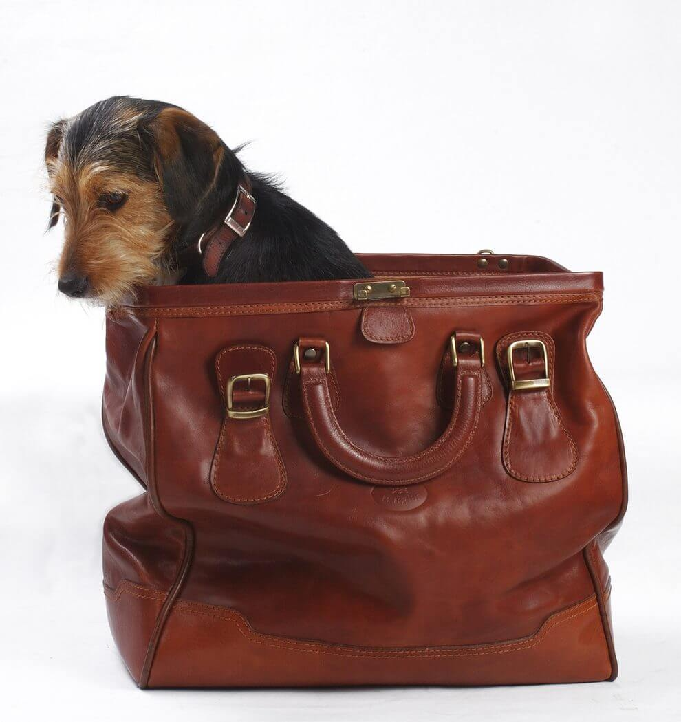dog-in-the-bag-1362561-1598x1062