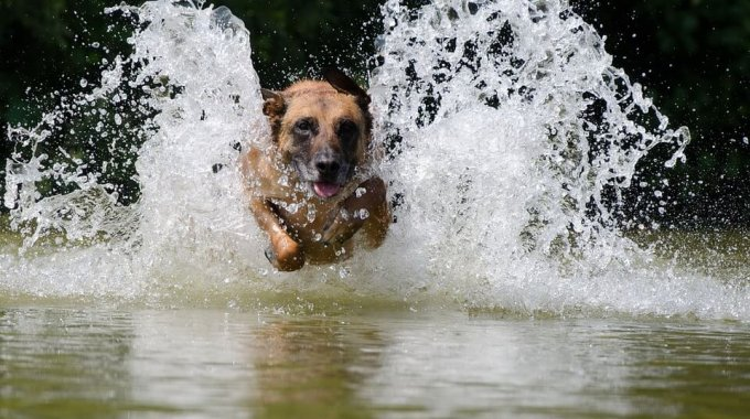 Cheshire Vets Heatwave Advice