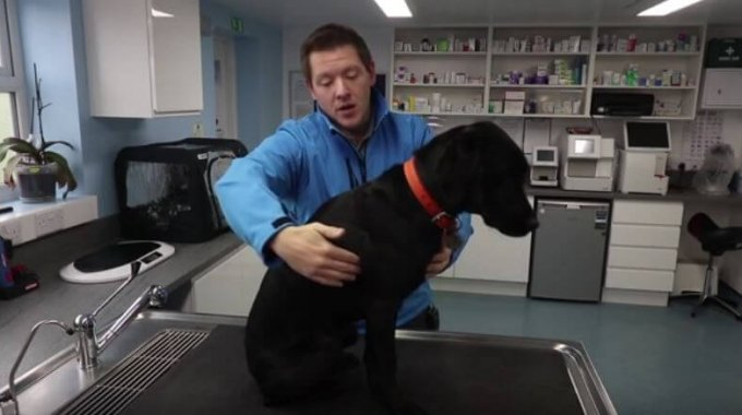Vets In Cheshire Offer Advice On Dog Weight