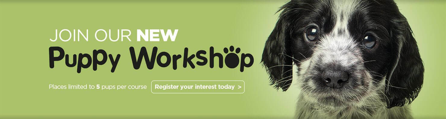 puppy workshop banner